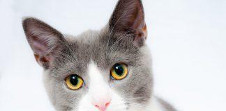 czego nie może jeść kot