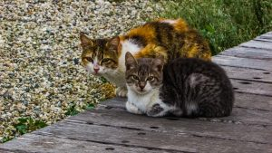 miłość u kotów