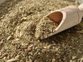ziołowa herbatka z czystka