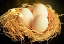 dieta jajeczna