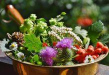 zioła na menopauzę