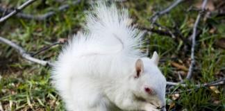 albinizm-czyli-bielactwo
