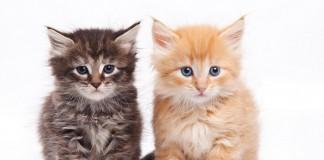 miedzynarodowy-dzien-kota