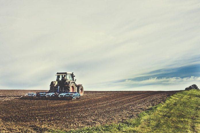 zostać żoną rolnika