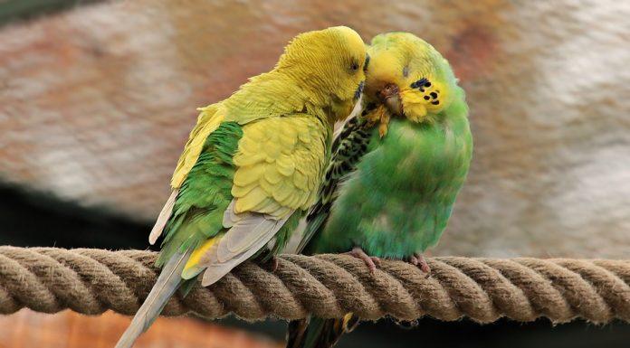 jak kochają zwierzęta