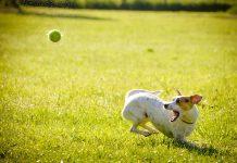 dlaczego warto adoptować psa