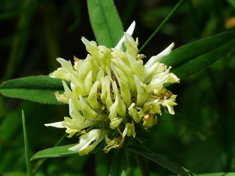 letnie zioła na menopauzę