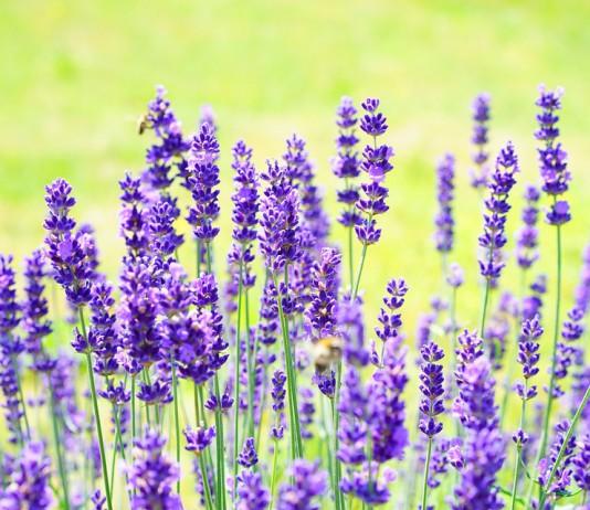 herbal trend czyli ziołowe zabiegi
