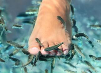 fish-pedicure-czyli-jak-zlote-rybki-dbaja-o-nasze-stopy