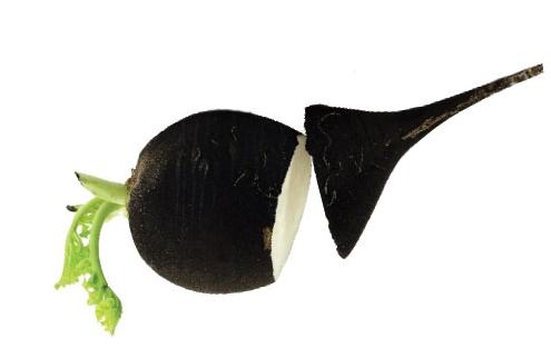 dobrodziejstwo-czarnej-rzepy