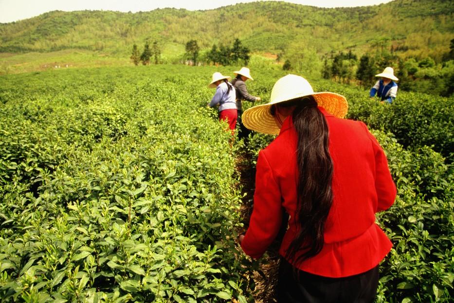 czas-na-zielona-herbate