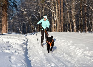 skijorking-zimowa-aktywnosc-z-czworonogiem