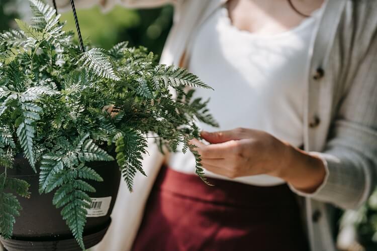 poradnik pielęgnacji roślin domowych