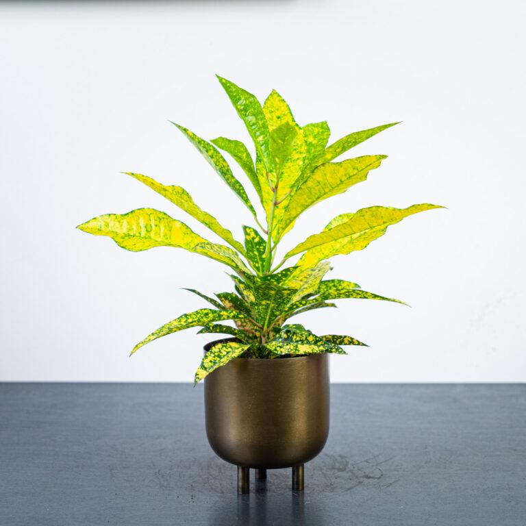 rośliny na mocne słońce